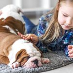Stop Dog Fights – Recognizing Aggressive Dogs