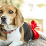 Pet Flea Control – Key Specifics Of Fleas You Have To Understand