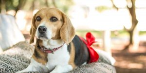 Should Your Dog Eat Raw Meat?